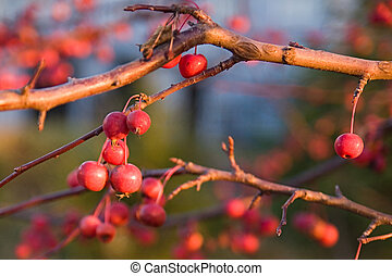 Berries on a branch.