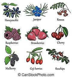 berries set - berries. hand drawing set of vector sketches
