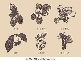Set of berries vector illustration.