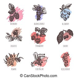 Collection of berries vector illustration.