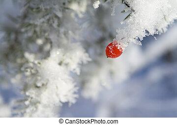 Berries under snow