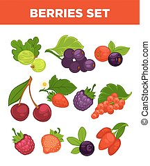 Berries vector isolated icons set