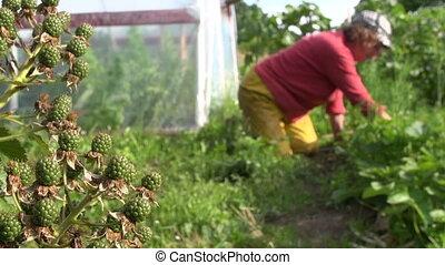 berry garden woman weed