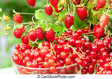 Berry mix - Various juicy berries on a sunny summer ...