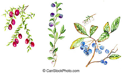 Berry Plants - Cranberry, Bilberry, Blueberry