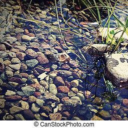 Bert the frog