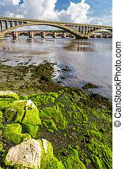 berwick-upon-tweed, pont, sous, algue, rocher