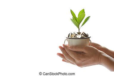 beschermen, financiën, handen, groeiende, boven., reddend geld, muntjes, plant, bankwezen, zakelijk, voorgestelde, concept