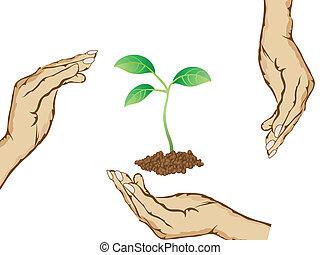 beschermen, handen, groen plant