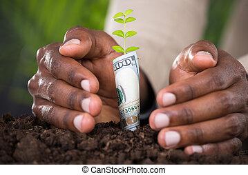 beschermen, plant, close-up, persoon, hand
