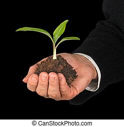 bescherming, symbool, natuur, hand, kiemplant