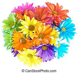 beschwingt, mehrfarbig, gänseblumen, blumengebinde