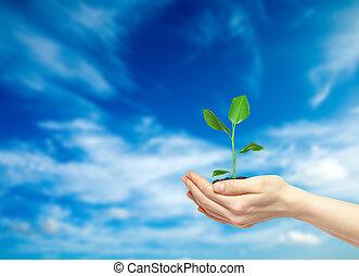 besitz, pflanze, hände, grün