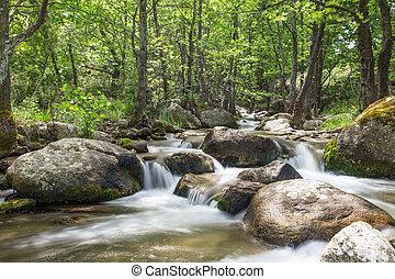 beskaffenhet landskap, med, träd, och, flod