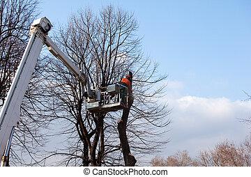 besnoeiing, bomen