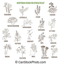 Best adaptogen herbs for stress relief. Hand drawn vector...