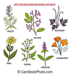 Best analgesic natural herbs for pain relief. Hand drawn...