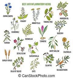 Best anti-inflammatory herbs. Hand drawn vector set of ...