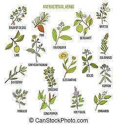 Best antibacterial herbs. Hand drawn vector set of medicinal...