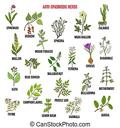 Best antispasmodic herbs collection. Hand drawn vector set of medicinal plants