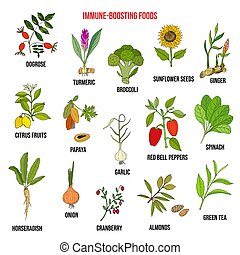 Best foods for the immune system. Hand drawn vector set