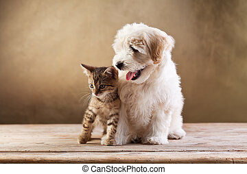 Best friends - kitten and small fluffy dog looking sideways...