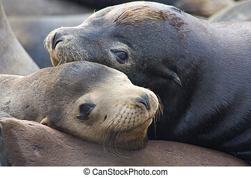 Best Friends - Two Sea Lions resting on a dock.