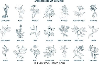 Best herbal aphrodisiacs. Hand drawn vector set of medicinal...