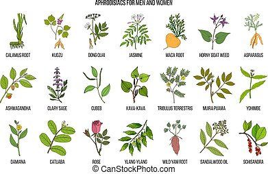 Best herbal aphrodisiacs. Hand drawn vector set of medicinal...