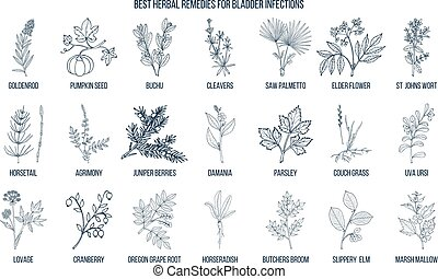 Best herbal remedies for bladder infections. Hand drawn...