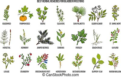 Best herbal remedies for bladder infections. Hand drawn vector set of medicinal plants