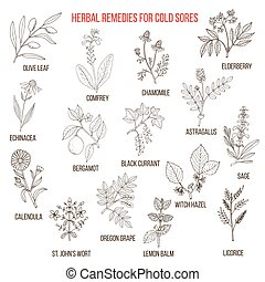 Best herbal remedies for cold sores. Hand drawn set of...