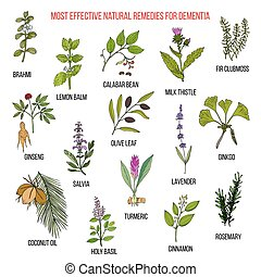 Best herbal remedies for dementia. Hand drawn vector set of...