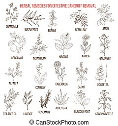 Best herbal remedies for effective dandruff removal. Hand...