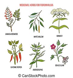 Best herbal remedies for fibromyalgia