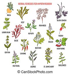 Best herbal remedies for hypothyroidism. Hand drawn set of...
