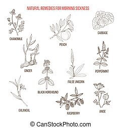 Best herbal remedies for morning sickness