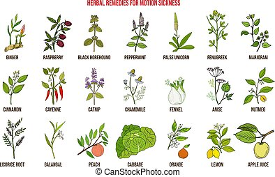 Best herbal remedies for motion sickness