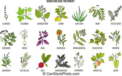 Best herbs for acne treatment. Hand drawn vector set of...