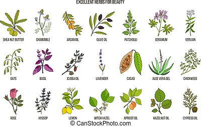 Best herbs for beauty care. Hand drawn vector set of...
