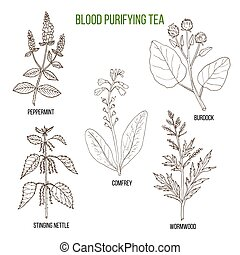 Best herbs for blood purifying tea. Hand drawn vector set of...