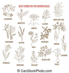 Best herbs for common cold
