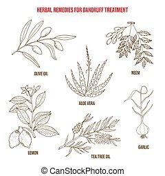 Best herbs for dandruff treatment
