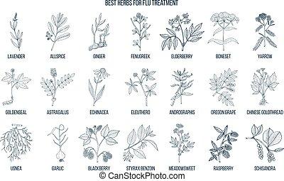 Best herbs for flu treatment