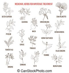 Best herbs for impotence treatment. Hand drawn set of...