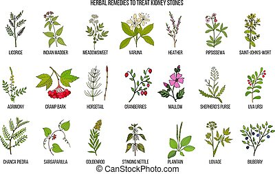 Best herbs for kidney stone disease. Hand drawn vector set...