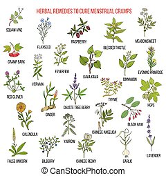Best herbs for menstrual cramps treatment. Hand drawn set of medicinal herbs