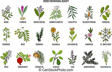 Best herbs for natural beauty. Hand drawn vector set of...