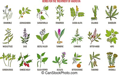 Best herbs for the treatment of anorexia. Hand drawn botanical vector illustration