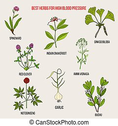 Best herbs to control high blood pressure. Hand drawn vector set of medicinal plants